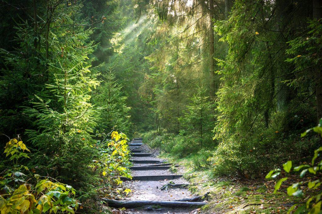 sentier cheminant dans la forêt
