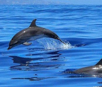 deux dauphins en liberté en pleine mer